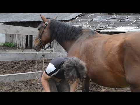 Продажа лошадей.