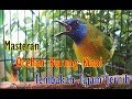 Masteran Burung Kinoi Gacor Suara Jernih Tembakan Kasar  Mp3 - Mp4 Download