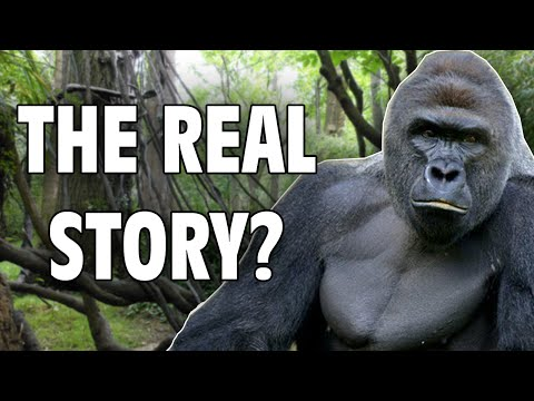 Harambe: The Real Story - Internet Hall of Fame