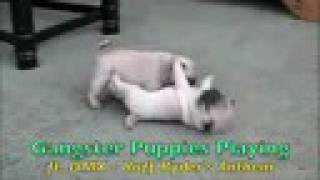gangster puppies playing ft dmx ruff ryder s anthem