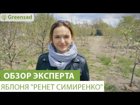 """Яблоня """"Ренет Симиренко"""""""