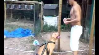 Evolution Tyler 05 - American Pit Bull Terrier Ukc - Weight Pull
