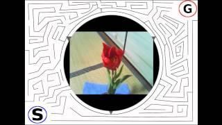 チューリップの開花する様をwebカメラで撮影しました。 ~オマケ迷路の...