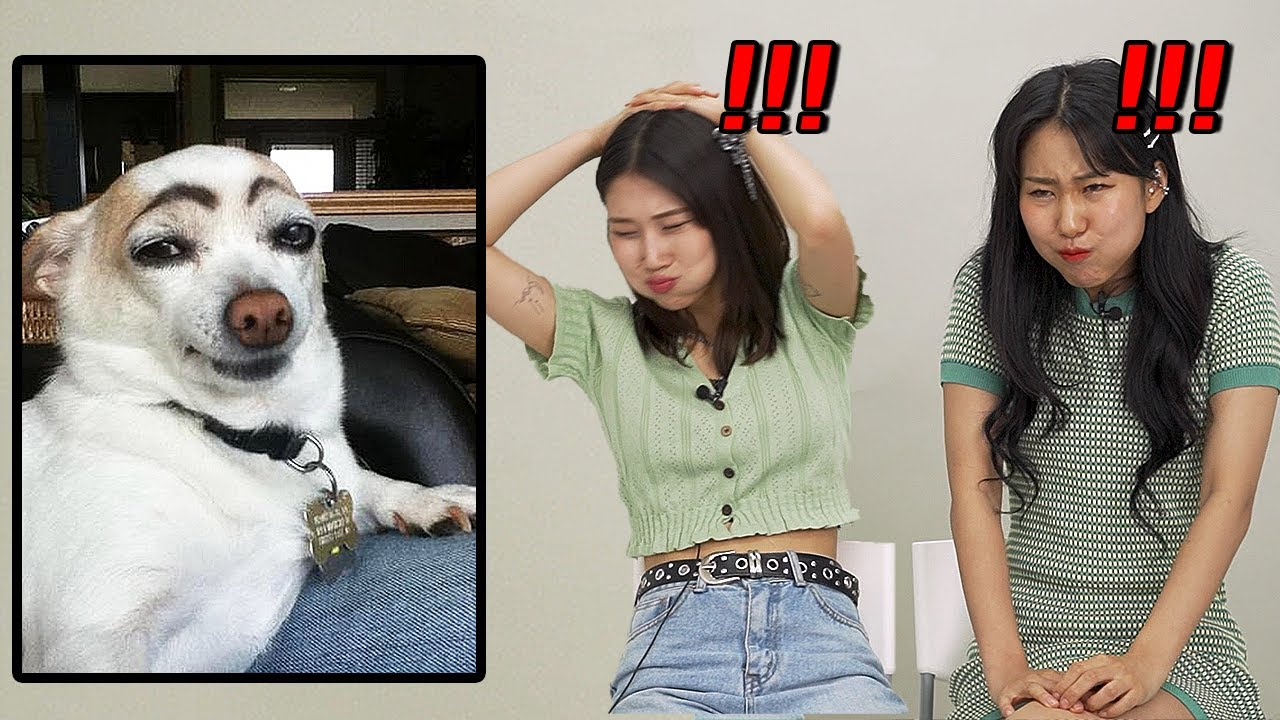 Korean girls Try to Watch Funny animal videos Without Laughing or Grinning WITH WATER!!!