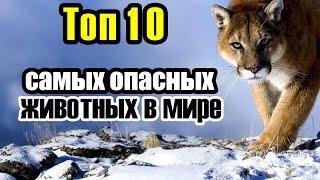 """Топ 10 самых опасных животных в мире - Невероятные факты (Чехменок Андрей """"CheAnD"""")"""
