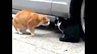 поющие кошки(Это видео создано с помощью видеоредактора YouTube (http://www.youtube.com/editor), 2014-10-24T07:04:50.000Z)