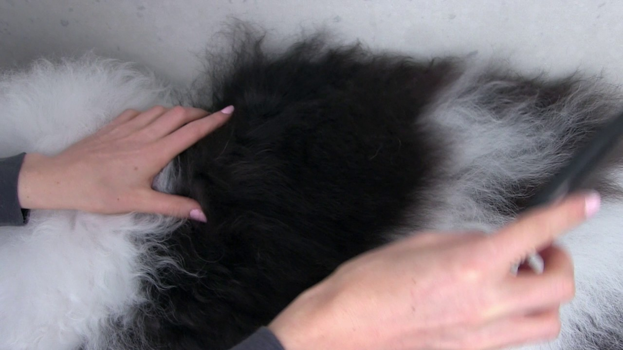 How To Remove Mats From Your Doodles Coat Grooming Your Doodle At Home With The Dematting Rake