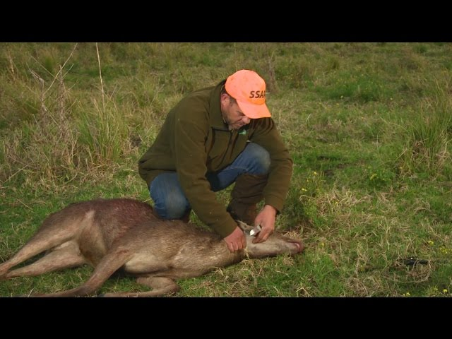 Field dressing a deer - Field to Fork part 3