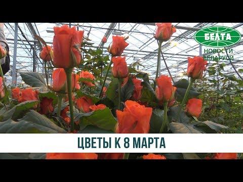 Цветы к празднику: как выращивают