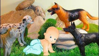 ПОДКИДЫШ в ЛЕСУ. Отважные СОБАКИ и человеческий детеныш. Мультфильмы про животных для детей