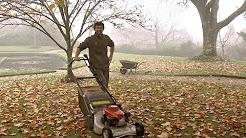 Top Tips from National Trust gardens - November
