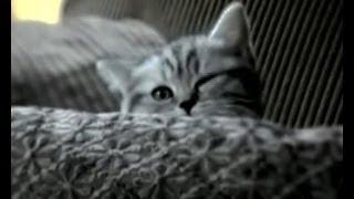 Кошки - Непростые Существа - Ранок - Інтер