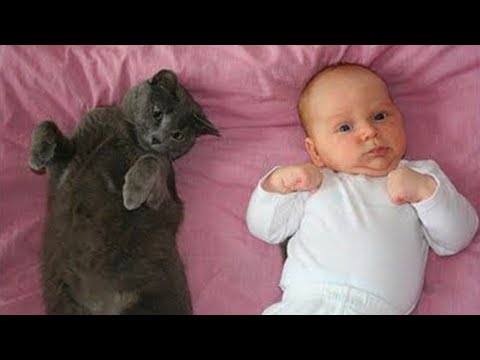 FUNNY CATS AND BABIES PLAYING TOGETHER 👶😽 Funny Babies and Pets