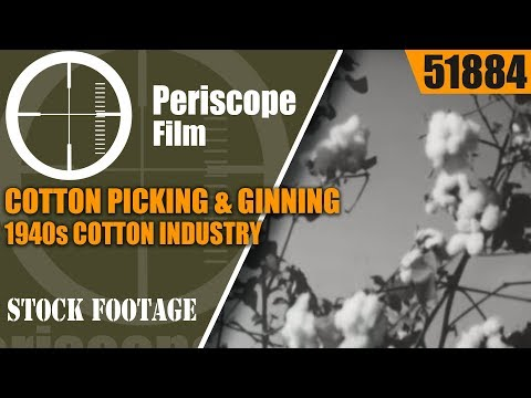 COTTON PICKING & GINNING  1940s COTTON INDUSTRY EDUCATIONAL FILM   1951884