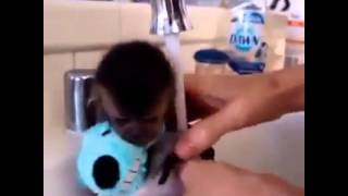 funny monkey compilation