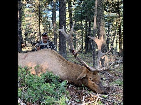 Mark's 2020 Archery Elk