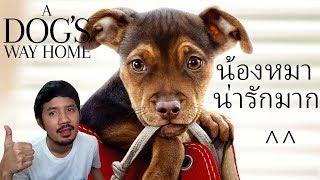 รีวิวหนัง-a-dog-s-way-home-เพื่อนรักผจญภัยสี่ร้อยไมล์