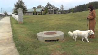 Corbett Ride & Train Day 14: Off-leash Recall, Heel, Sit, Wait, Place (distraction Training)