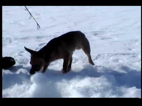 Manitoba ice fishing show youtube for Ice fishing show