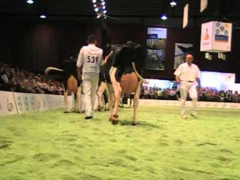 Holstein Master Sale Nr. 06