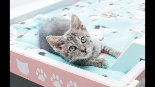 LIVE from the kitten room: CATURDAY Q&A! thumbnail