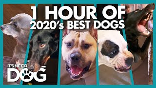 Over ONE HOUR of the Year's Best Dogs | It's Me or the Dog