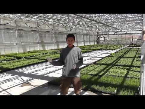 Internship in a greenhouse nursery in the USA arranged by Th