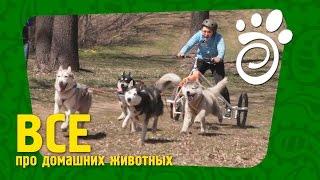 Собачий Спорт.Все О Домашних Животных