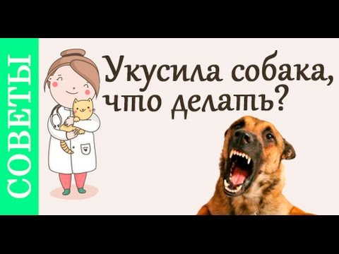 что делать если собака укусила
