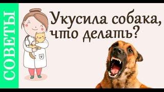 Если укусила собака, что делать? #Советы_ветеринара