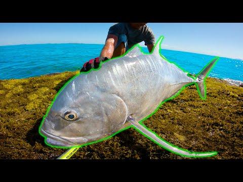 Big Fish First Cast