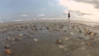 ゾワゾワ来る…!砂浜からいっせいに姿を現す貝の映像をご覧ください(ツブツブ注意)