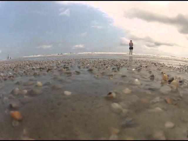 Clams on the Beach