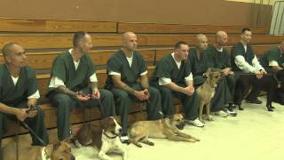 Program In Southern New Mexico Has Inmates Training Dogs