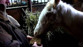 Viking, un cheval de fer