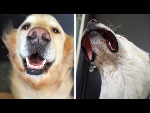 The only dog video you need to watch..