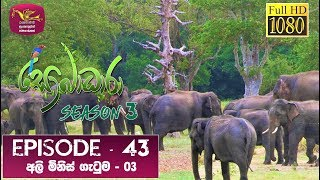 Sobadhara - Sri Lanka Wildlife Documentary | 2020-01-24 | Elephant-Human Conflict (අලි මිනිස් ගැටුම) Thumbnail