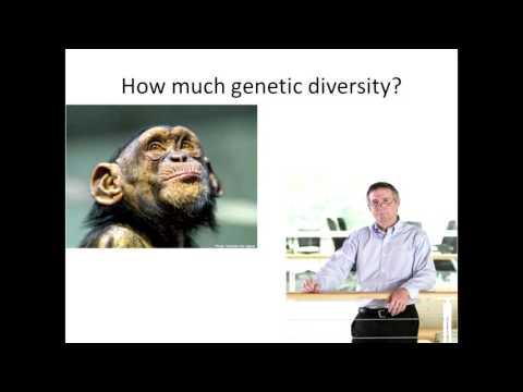 Race and Genetics | Dr Allen Gathman | TEDxSoutheastMissouriStateUniversity