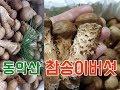 식품·의류까지…온라인 유통 공룡 '아마존' / SBS