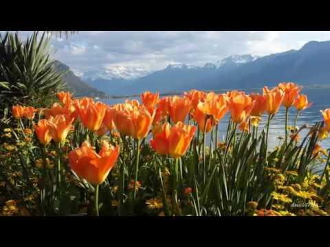 RELAXING BEAUTIFUL SPRING SWITZERLAND 2017 HD 1H Relaxing Music Classical Calm Piano