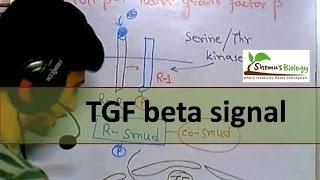TGF beta signaling