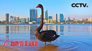 《城市1对1》 20190607 诗意之城 中国·马鞍山——澳大利亚·珀斯  CCTV中文国际