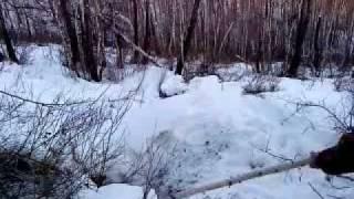 охота на медведя берлога