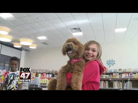 New therapy dog at Donley Elementary School