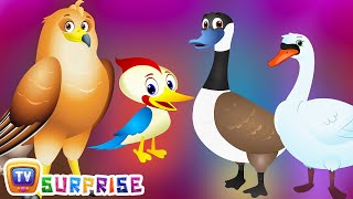 Surprise Eggs Wildlife Toys | Birdwatching in Wildlife & Birds Sounds | ChuChu TV Surprise For Kids