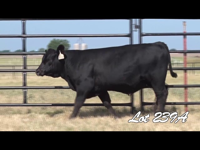 Pollard Farms Lot 239A