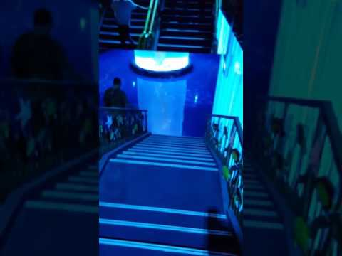 Aquarium jakarta @neo soho