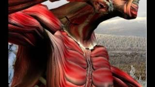 Pressure points of the torso 6 (brachial plexus) Level 1
