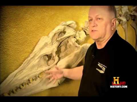 Documentary Films Dinosaurs documentary   Predatory monsters   Full Documentary Film