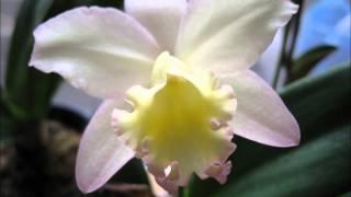 英亜里 - 花の手拍子